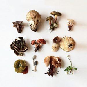 Medicinske Gljive